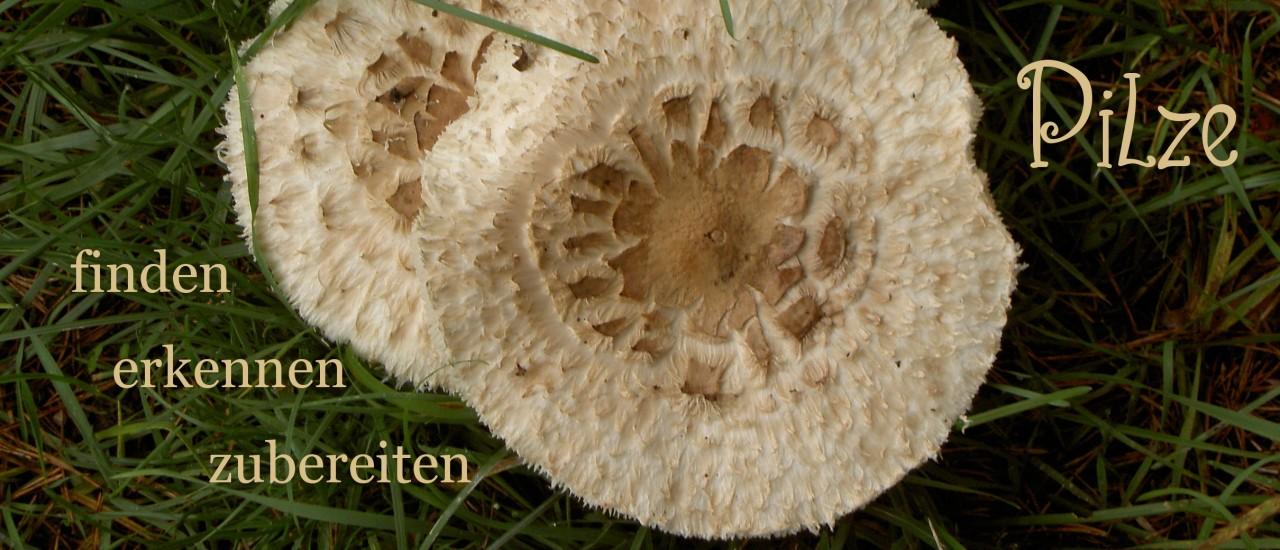 Pilze finden, erkennen, zubereiten