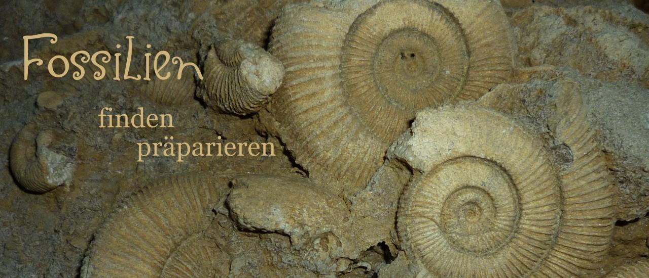 Fossilien finden und präparieren