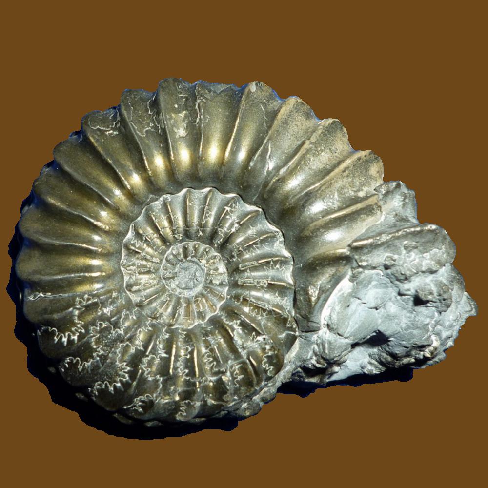 Geologie: Gesteine, Fossilien finden, erkennen, präparieren