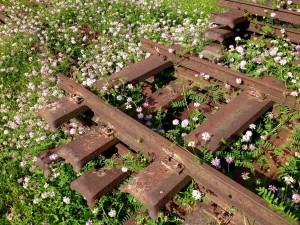 BlumenSchienenstrang